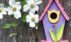 Cool Painting Projects, Too: Birdhouses, Mailboxes, and More (By Debbie Zimmer)